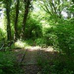 Bois communaux – Exercice du droit de chasse
