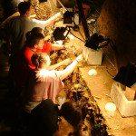Été archéologique à Scladina