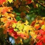 Balade d'automne – École de Reppe