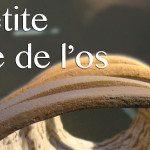 «Une petite histoire de l'os» – Exposition au Musée de la céramique