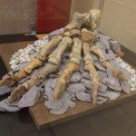 Exposition «best of» – Centre archéologique de la grotte Scladina